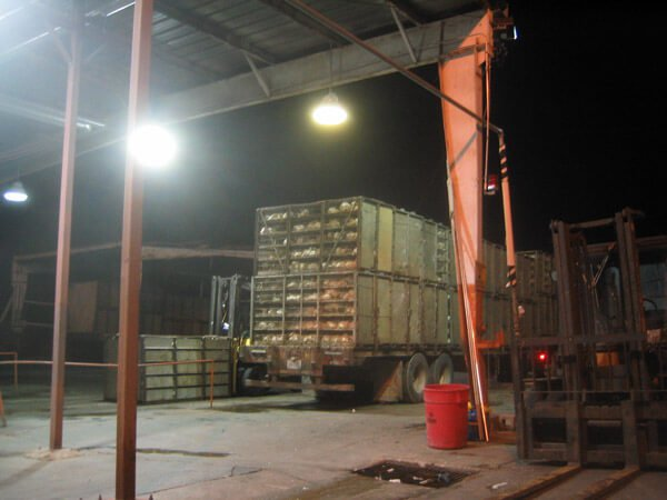 egg-production-industry-17