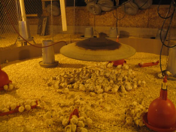 egg-production-industry-4