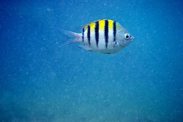 swimming-fish