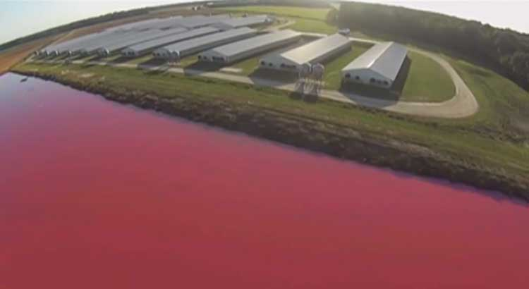 Man Uses Spy Drones to Show the Environmental Consequences of Factory Farming