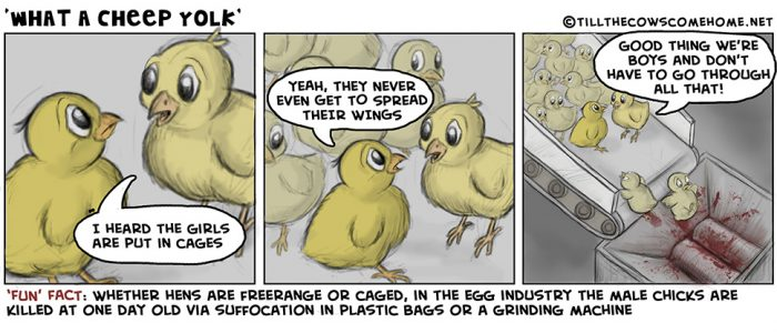 egg-industry-comic