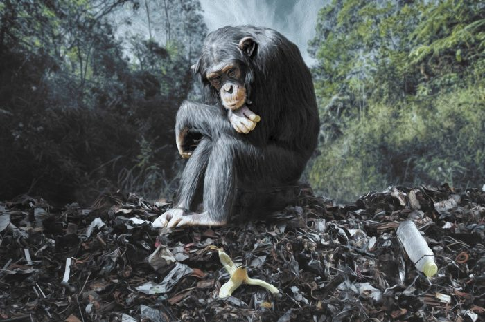 sad-monkey-pollution